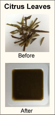 Citrust leaves before and after homogenization